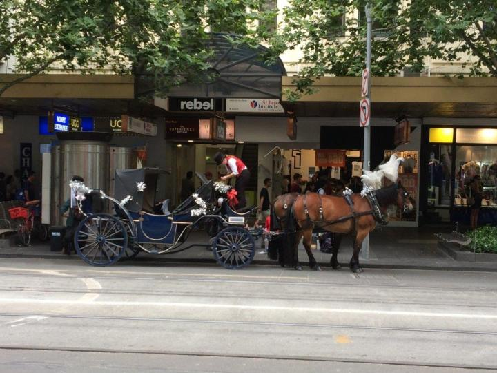 Horse rides available around the city